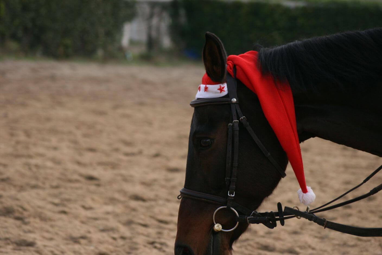 Equestrian Center Roma Cavallo