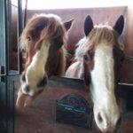 Pony Club Roma Equestrian Center Scuderia