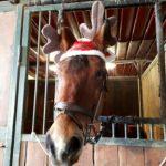Pony Club Scuderia Interno